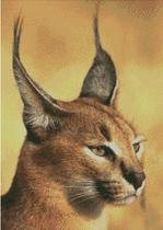 Cross Stitch Chart Pattern of a Caracal