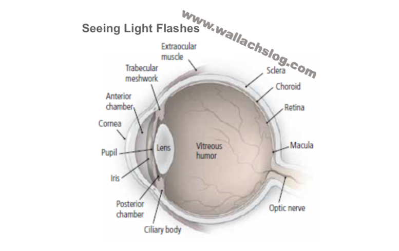 Seeing Light Flashes - Dr. Joel Wallach
