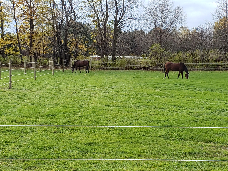 Horse Boarding Facilities - Newstead Equestrian Center Llc  - Akron, Ny