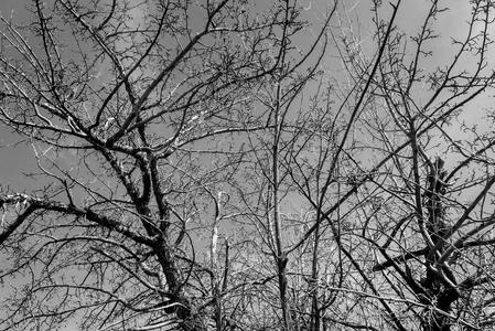 black and white, trees, Amy Ballard