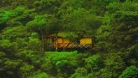 Treehouses in Wayanad