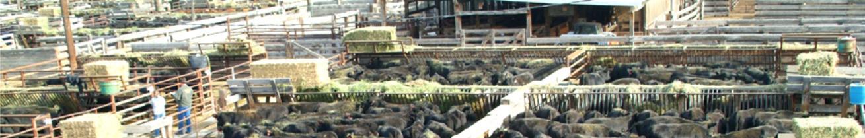 Sheep & Goat Sale Schedule