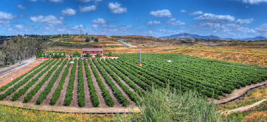 Temecula Berry Co - blueberries,
