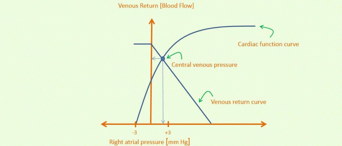 Guyton Diagram