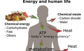 Metabolism & Hormones - How Did I get Fat?