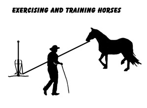Exercising and Training Horses