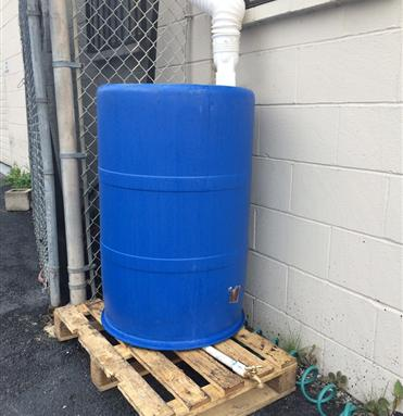custom 55 gallon rain harvesting barrel