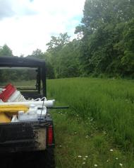 lespidiza alfalfa food plot