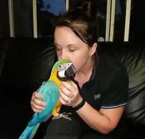 Blue and Gold Macaw Sale Australia