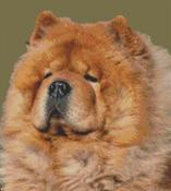 Cross Stitch Chart of a Chow Chow
