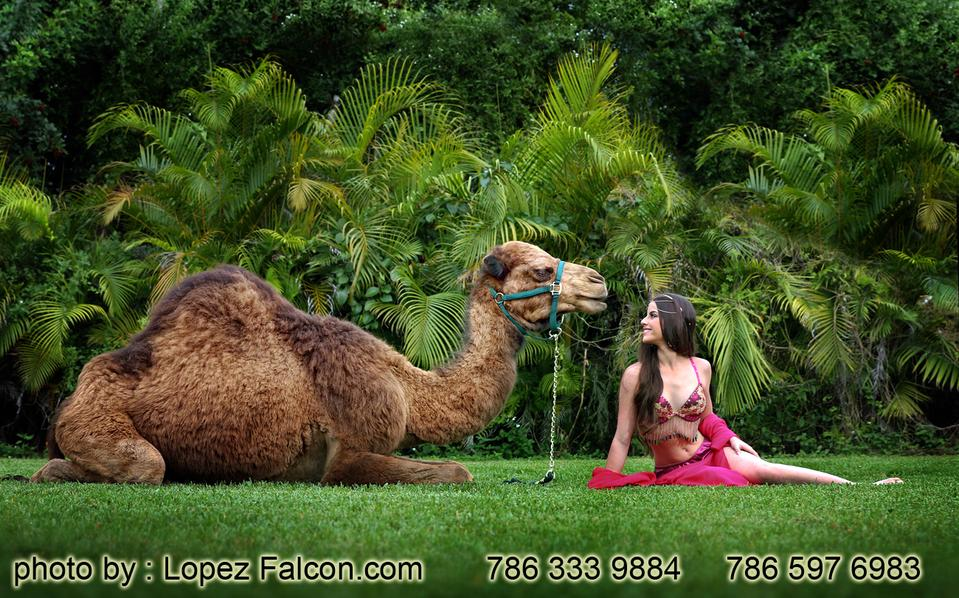 Camel for Quinceanera Photography Quinceanera with Camels Quince ...