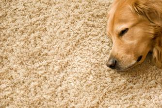 carpet cleaning pet and eco friendly