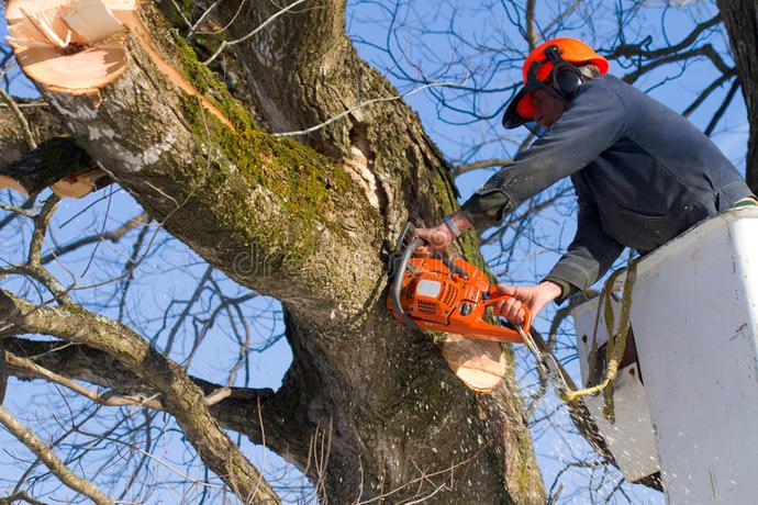 TREE BRANCH REMOVAL SERVICES