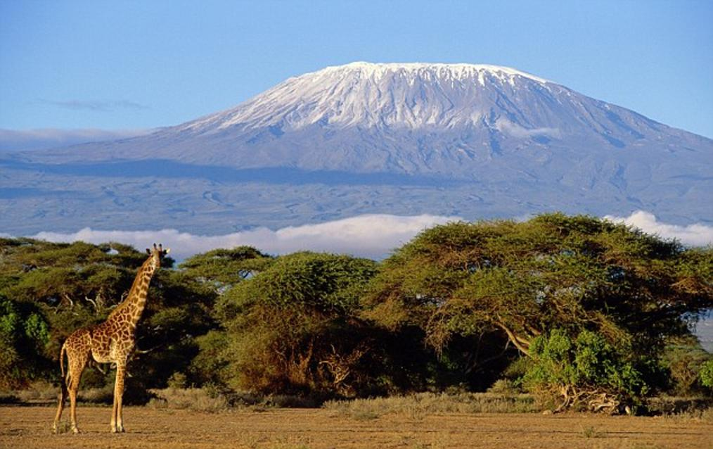 mount kilimanjaro, snow covered peaks