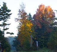Fall tree colours at Sunset Villa