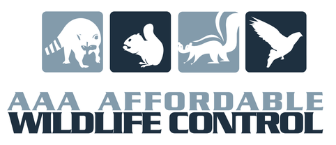 Affordable Wildlife Control