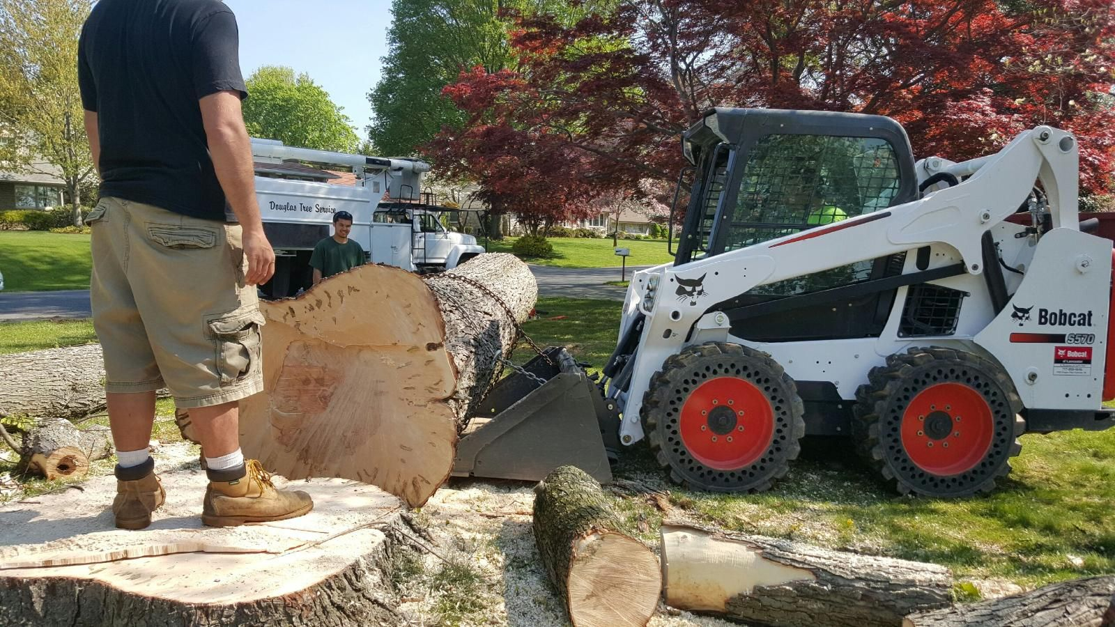 Image result for tree cutting services