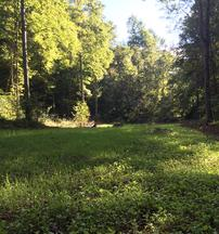 Best Kentucky food plots