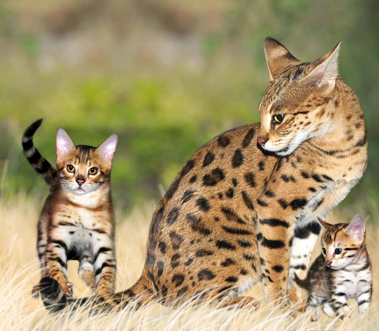 Kessavannah - Animal Care, Animal Transportation