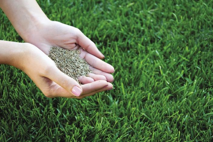 LAWN OVERSEEDING AND CARE IN EDINBURG MCALLEN TEXAS AREA
