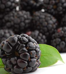 A pile of blackberries
