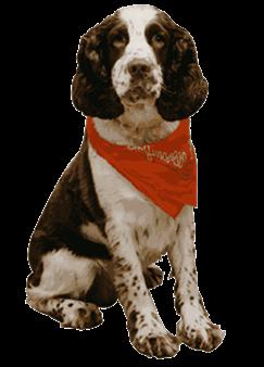 Contact us annes pretty pups solutioingenieria Choice Image