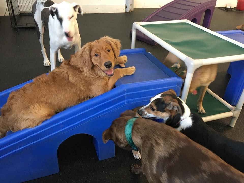 St  Paws Dog Daycare & Boarding : Contact