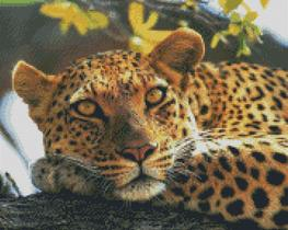 Cross Stitch Chart Pattern of a Leopard