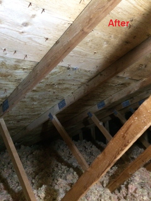 Mold removal attic home mold removal from 400 solutioingenieria Images