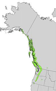Alaskan Yellow Cedar's Growing Region