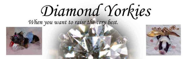 Home - Diamond Yorkies