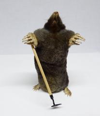 Adrian Johnstone, professional Taxidermist since 1981. Supplier to private collectors, schools, museums, businesses, and the entertainment world. Taxidermy is highly collectable. A taxidermy stuffed Mole With A Hoe (121), in excellent condition.