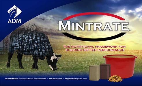 Mintrate products are available at Performance Blenders.