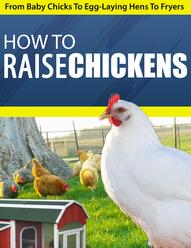 How To Raise Chickens Info