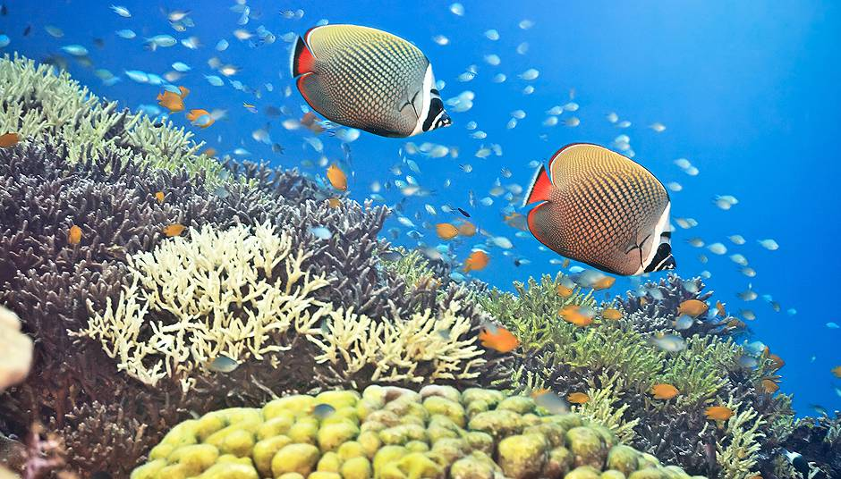 Saltwater & Freshwater Fish Melbourne, FL   Aquarium & Pond