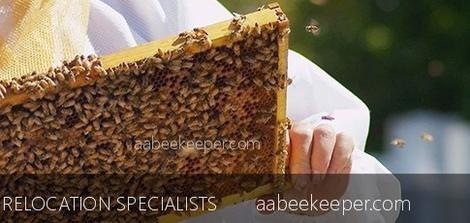 Laguna Beach Beekeeper orange-county-bee-removal Laguna Beach