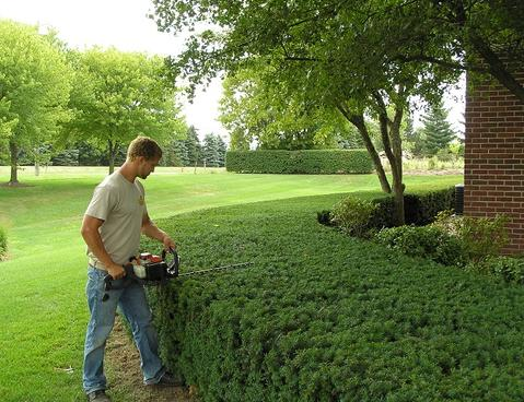 CHEAP SHRUB PLANTING AND CARE SERVICES LAS VEGAS NV