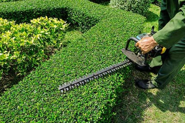 SHRUB TRIMMING SERVICES
