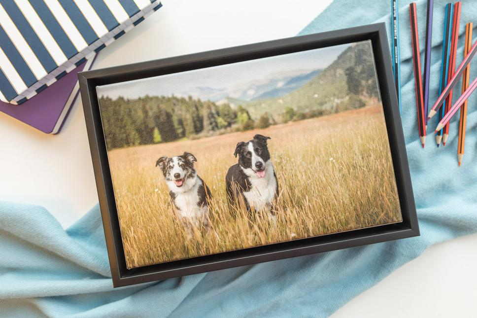 Framed canvas photo of a dog