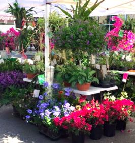 A view inside the Cameo Farm booth at a Texas market with a wide variety of colorful plants.