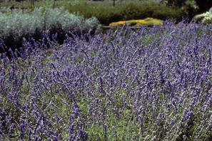 Plant Information For Helotes And San Antonio Wilson Nursery