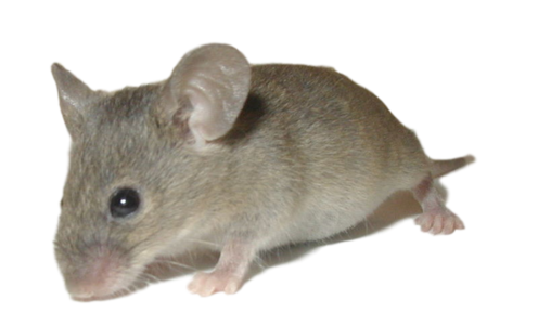 Rodent Control Services | Serving Greater Ann Arbor