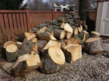 Yard Waste Removal Yard Waste Trees Branches Leaf Removal Service and Cost | Las Vegas NV | Service-Vegas