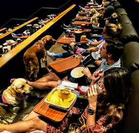 Movie Night with Your Dog