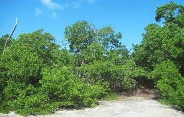Affordable Lot for North Caye Investment