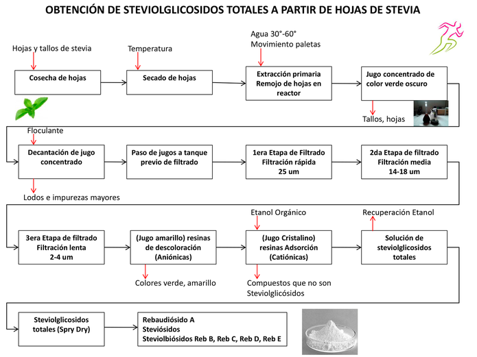 Aprende sobre la Stevia