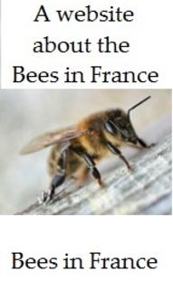 A website about bees and their conservation in France