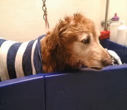 Do it yourself dog wash this is a great service for people that have big dogs aggressive dogs dogs that have separation anxiety or need to be bathed weekly because of a skin solutioingenieria Gallery
