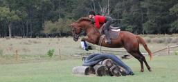 Horse Trainings In New Jersey