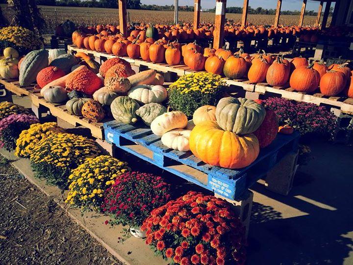 Britt's garden acres pumpkin patch & corn mazes manhattan, ks.